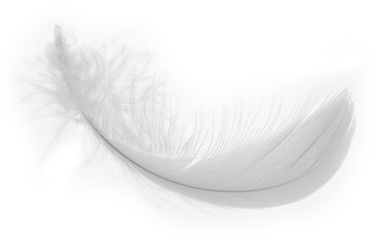 white-feather-hr-no-background